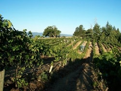 Roma's Vineyard in Mendocino