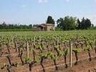 Small Family Winery