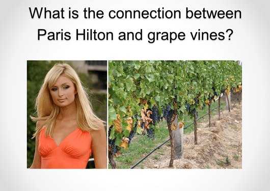 What is the Relationship Between Paris Hilton and Grape Vines?